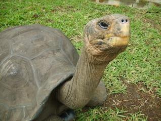 Turtle, wrinkled