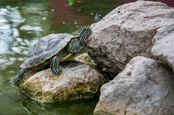 Turtle on the rocks