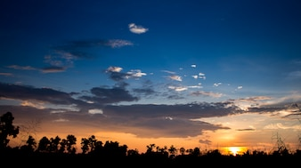 Twilight sky and golden light with Silhouette tree. High level of noise. Night sky with cloud