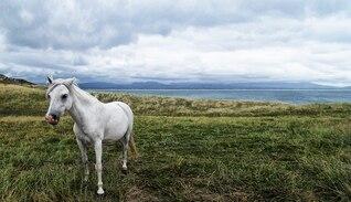 unicorn hdr animal horse