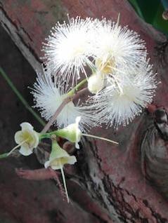 unusual white blossom