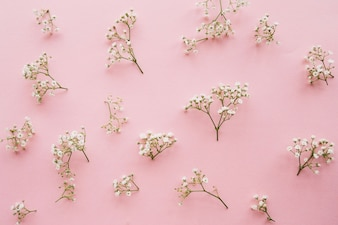 Variation of little baby's breath flowers on a light pink background