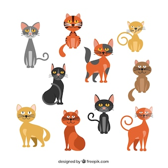 Variety of cats