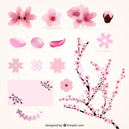 Variety of cherry blossoms