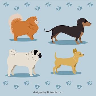 Variety of dog breeds