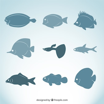 Variety of fish breeds