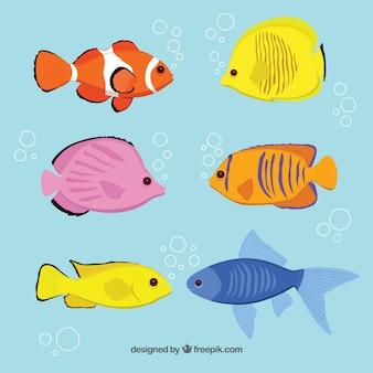 Variety of fish breeds