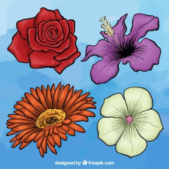 Variety of hand drawn flowers