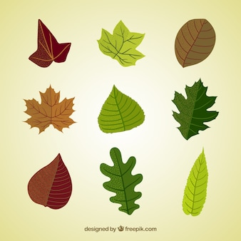 Variety of natural leaves