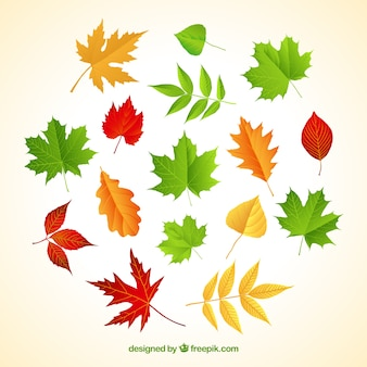 Varity of autumnal leaves