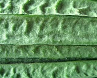 Vegetable Texture