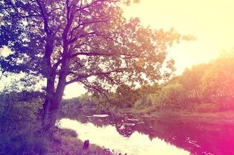 Vintage sunburst autumn over lake.