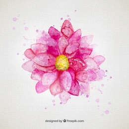 Watercolor flower in pink tone