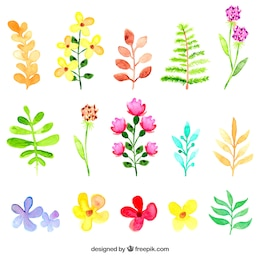 Watercolor flowers and leaves