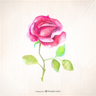 Watercolor style rose