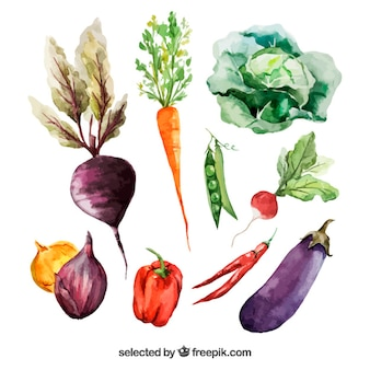 Watercolor vegetables