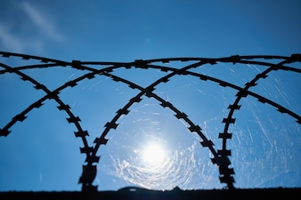 Web in a metal grille