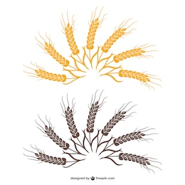 Wheat fan vector