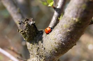 where are u going lady bug