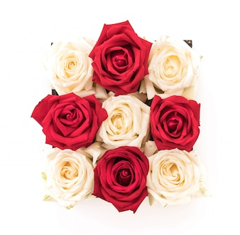 White and red rose on white