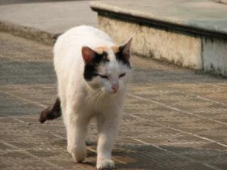 White Cat, fur