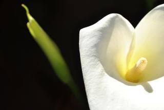 white flower  flower  white