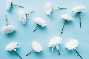 White flowers over a light blue background