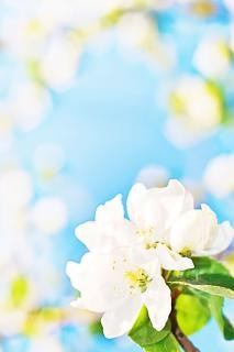 white flowers with blurred background