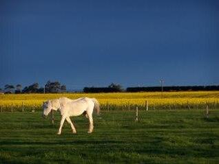 White Horse and Rape
