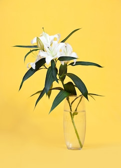 White lily in vase on yellow