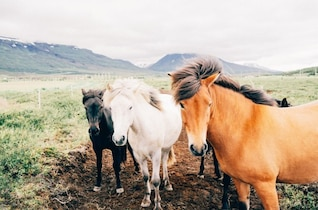 Wild horses in the countryside