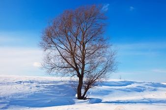 Winter lanscape with single tree