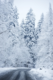 Winter Scenery - Forest Road