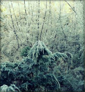 Winter , winter, frosty