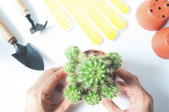 Woman's hands holding a pot of cactus with garden tools on white background, top view with color filter