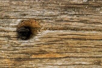 Wood close up with a hole
