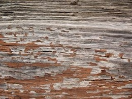 wood texture  wood  freetexturefrida