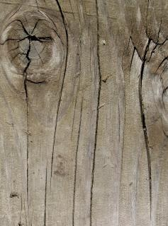 Wood texture  surface  texture  tree  freetexturefrida