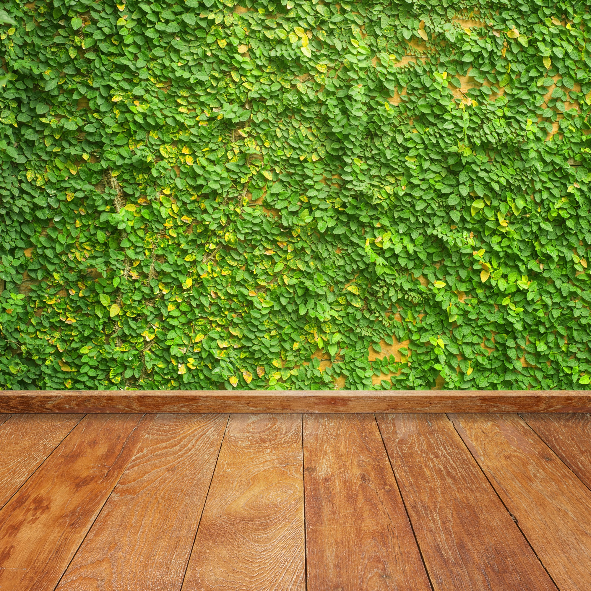 Wooden boards with a vine on the wall