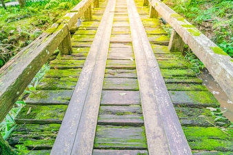Wooden bridge in tropical green forest covered with  moss .