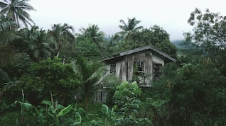 Wooden House in the jungle
