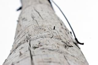 Wooden pole, area
