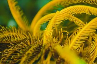 緑色の背景を持つ黄色の羽毛