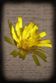 yellow flower  paper