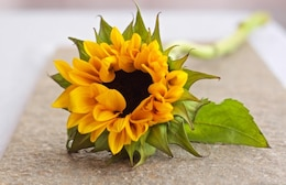 Yellow flower in blurred background