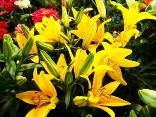 Yellow flowers, sunny