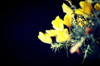 Yellow flowers and black background