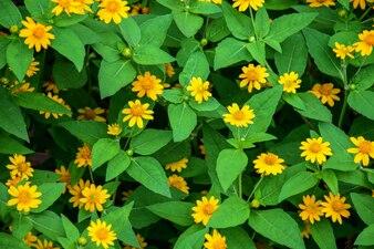 Yellow flowers between green leaf