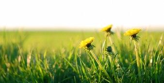 フィールドに黄色の花