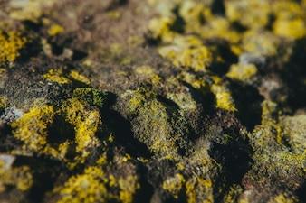 Yellow moss texture